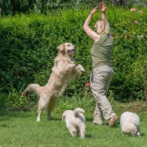 Coaching mit Hunden bringt Glück