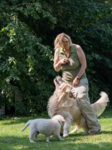 Coaching mit Hund bringt Glück und Erfolg